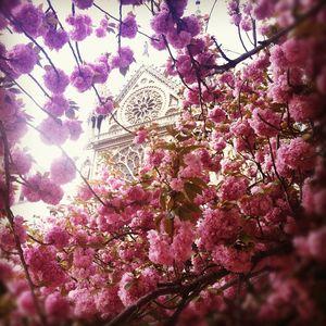 EF Educational Tours - Notre Dame